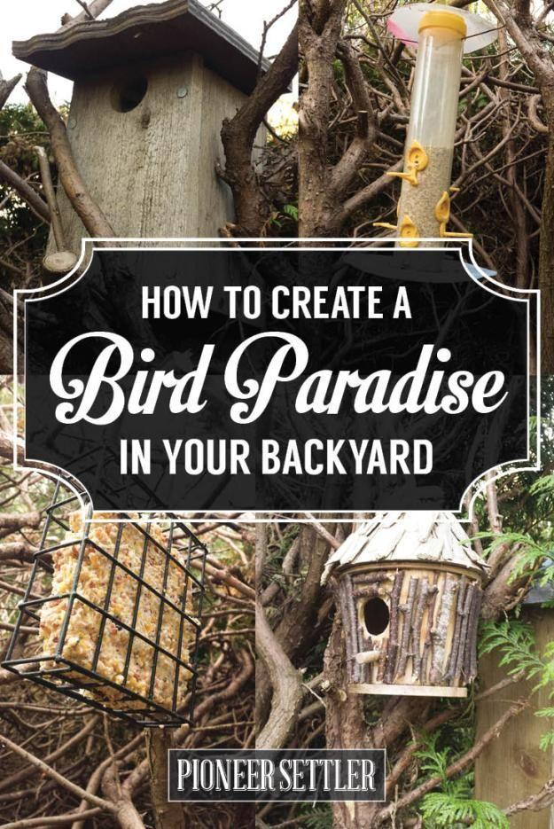 DIY Bird Baths, Bird Houses, Bird Feeders, and How to Keep Your Backyard Birds…