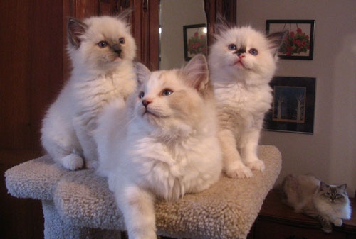 ... collection of Animals and pets ideas to try   Cats, Seals and Kittens