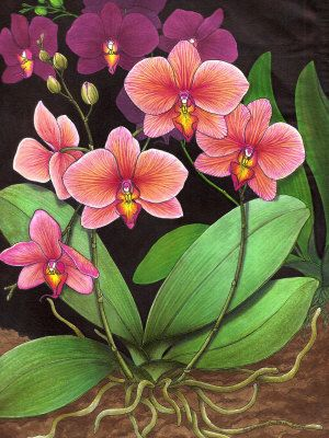 how to draw orchids - Google Search
