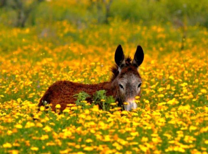 So beautiful....donkey :)