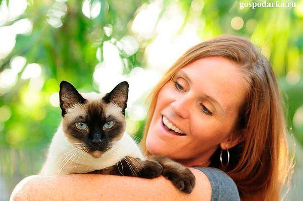 Эти умные и странные животные – кошки