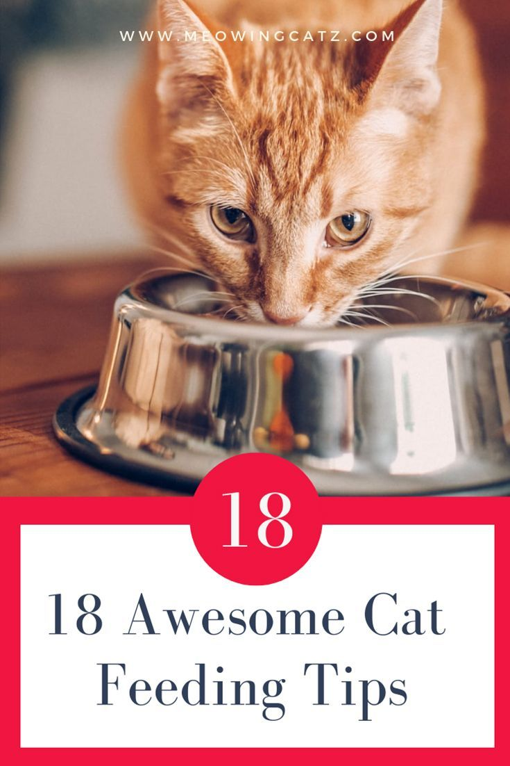 Cathealthhappy Cats Food Feed Cat Feed Nervous Cats Feeding Cats How Many Times A Day Should I Feed My Cat How To Feed A C Cat Feeding Cat Food Cat Care