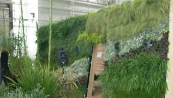 The Vertical Green Company - The Vertical Green Company specialises in designing, growing, installing and maintaining soilless living walls or hanging gardens.