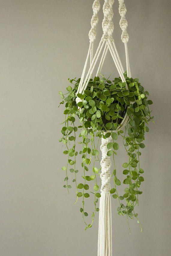 White Macrame plant hanger for wide pot, Dischidia nummularia