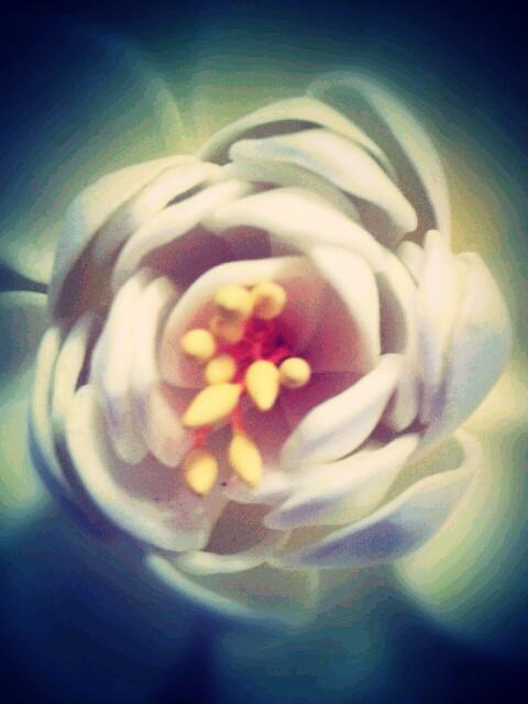 wooden petals