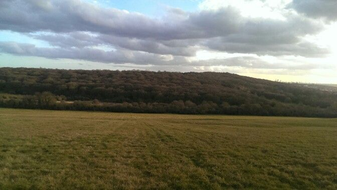 Yardley Hill, looking out onto Epping Forest, Chingford