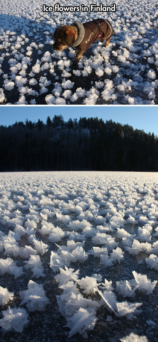 Ice flowers in Finland…