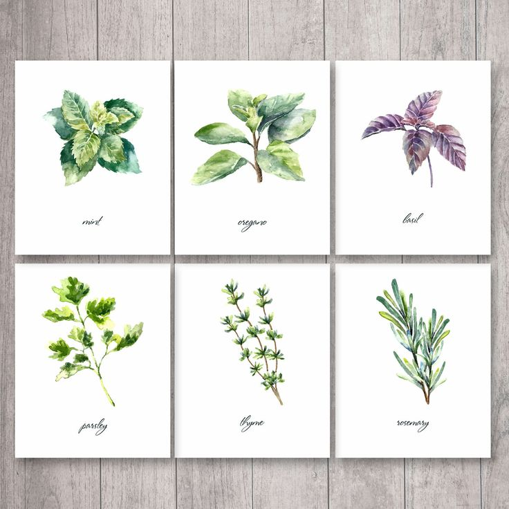 Herbs Print, Kitchen Print, Kitchen Printable, Watercolor Herbs, Botanical Printable, Kitchen Decor, Herbs Wall Art, Herbs Printable by LetMePaperie on Etsy https://www.etsy.com/listing/280065602/herbs-print-kitchen-print-kitchen