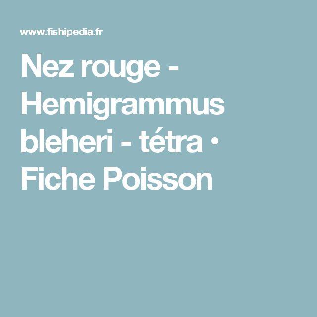 Nez rouge - Hemigrammus bleheri - tétra • Fiche Poisson