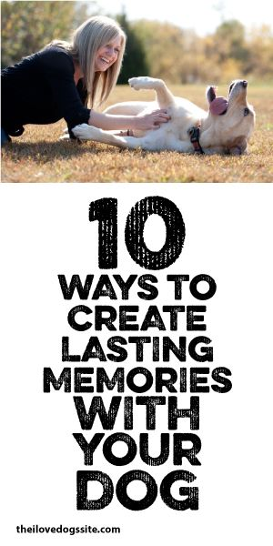 10 Ways To Create Lasting Memories With Your Dog <3