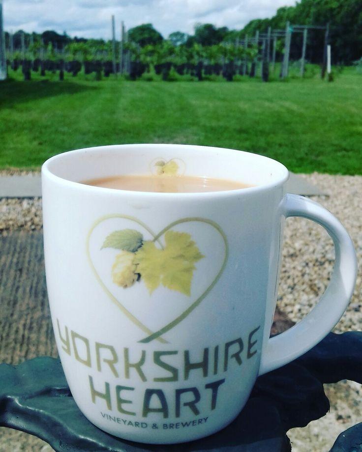 Enjoying a mug of Yorkshire Tea at Yorkshire Heart Vineyard.
