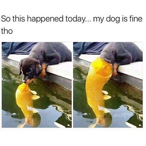 (BERKAWAN) Mungkin ini cara ikan tu nk mulakan persahabatan ..