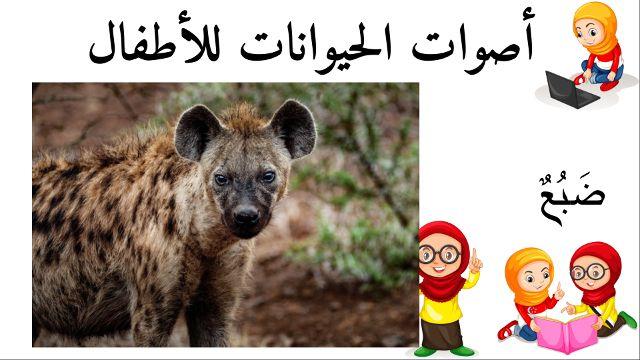 ضبع أسماء الحيوانات للأطفال وأصواتها Animals Kangaroo