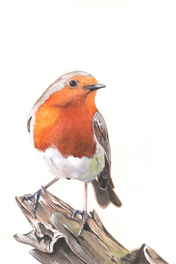 Robin Aquarell Malerei 2014 - Aquarell - A4 Inkjet Print Vogel Drucken Wand-Kunstdruck - Vogel Kunst - Kunstdruck - Wildtiere Drucken R7515