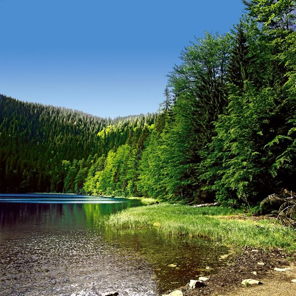 #Rachelsee - Bayerischer Wald #Wandern im Nationalpark #Bayern