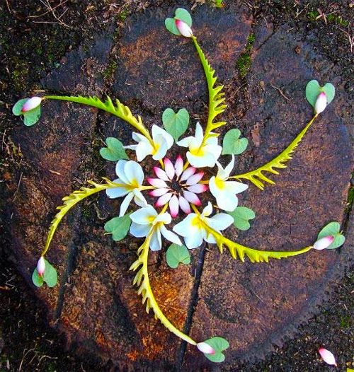 Flower mandalas by artist Kathy Klein - note the heart-shaped leaves.