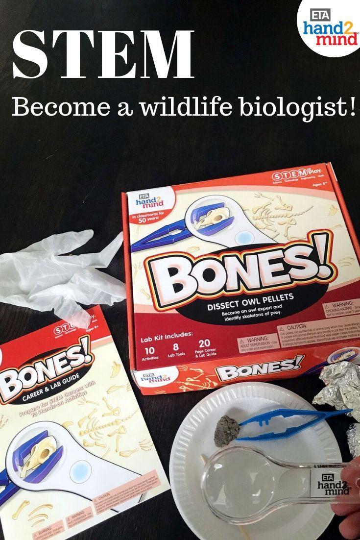 Stem At Play Bones Dissect Owl Pellets Kit Owl Pellets Science Kits For Kids Stem Experiments