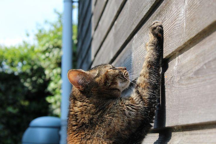 La catégorie #griffoir pour #chat de My-Animalerie.com propose des tas d'accessoires permettant à l'#animal de faire ses #griffes ! De toutes matières, textures et tailles, trouvez le griffoir pour chat pas cher idéal pour votre animal ! #animalerie #félin #chaton #chat #griffoir #griffe