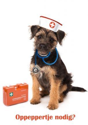 Beterschap kaart. Hond als verpleegster, zuster