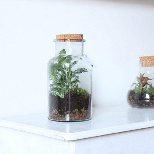 Zalias ecosysteem - Wonderlijk Woud