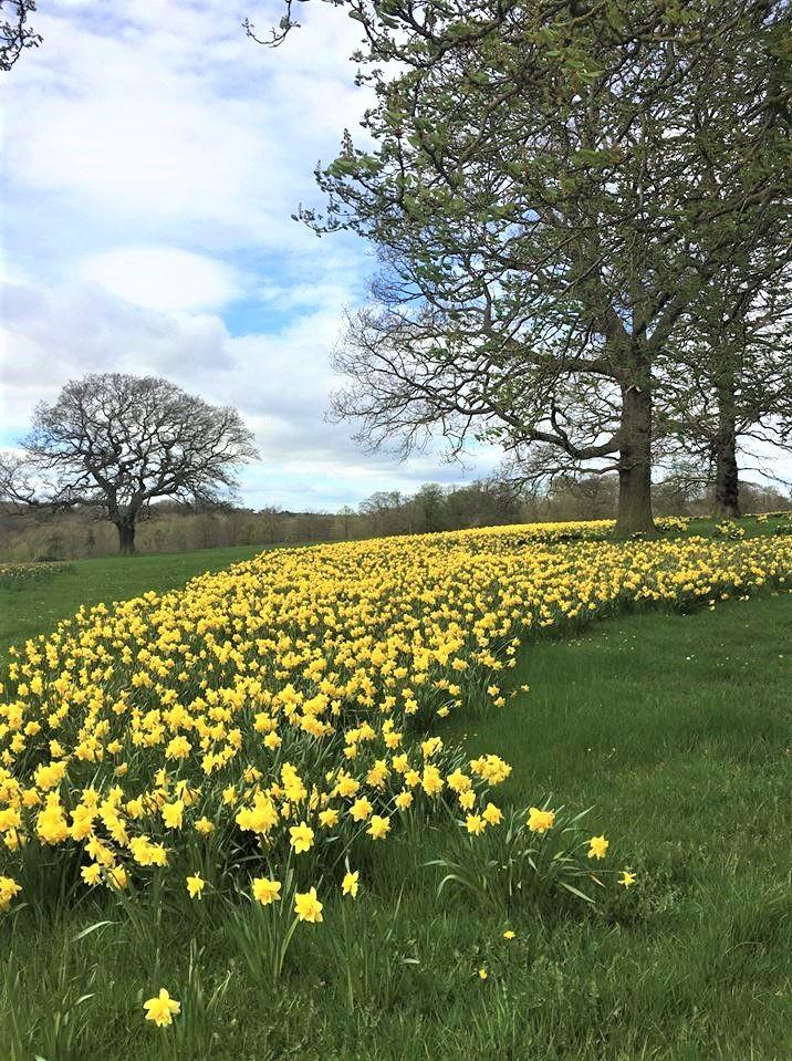 Beautiful Spring Scenery Scenery Landscape