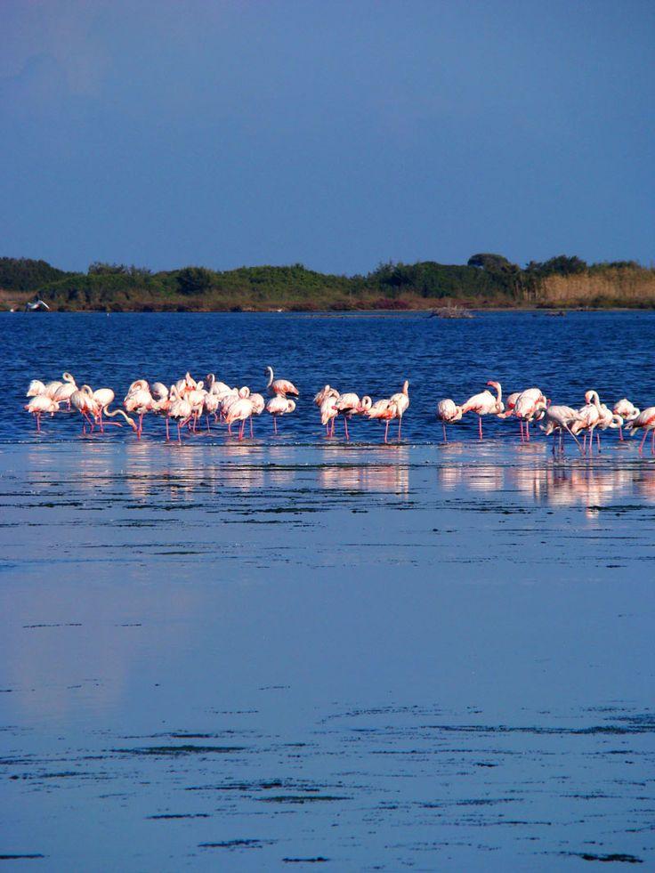 La laguna di San Teodoro, un ecosistema unico, ospita un grande patrimonio biologico di flora e fauna, paradiso per il bird watching! Se si è fortunati si possono avvistare i bellissimi fenicotteri rosa :)