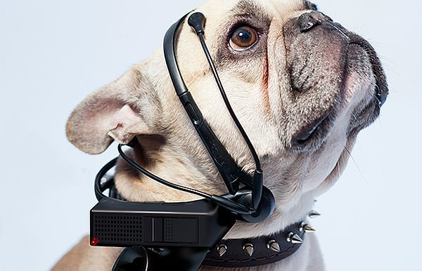 No More Woof is a device that translates your dog's thoughts into human language.   AKA dogs of UP