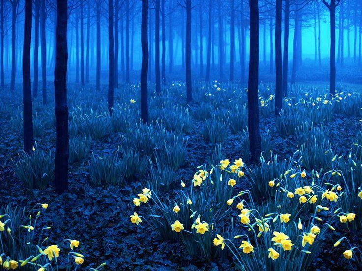 20 невероятных мест на планете, в существование которых сложно поверить. Шварцвальд (Черный лес), Германия
