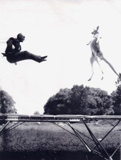 <p>Want to know what it feels like to fly? Here's your ticket: Olympic trampoline, a gymnastics event that has athletes soaring, flipping, and twisting 30 feet in the air. </p> https://greatist.com/fitness/15-things-you-didnt-know-about-olympic-trampoline