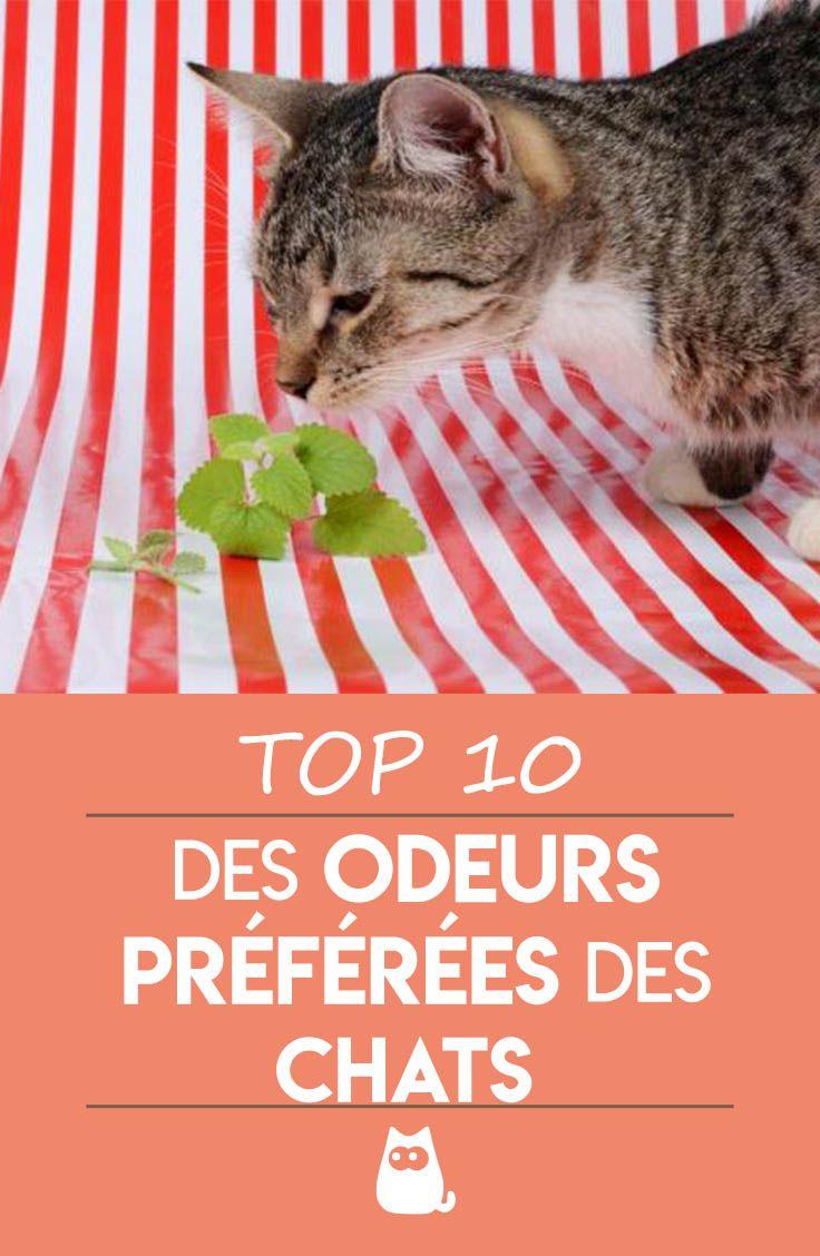TOP 10 DES ODEURS PRÉFÉRÉES DES CHATS !