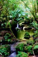 Day 340: Montane rainforest, Kilimanjaro National Park (Tanzania)