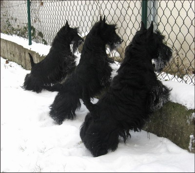 We love scotties!
