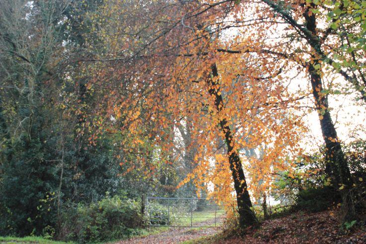 Killykeen Forest