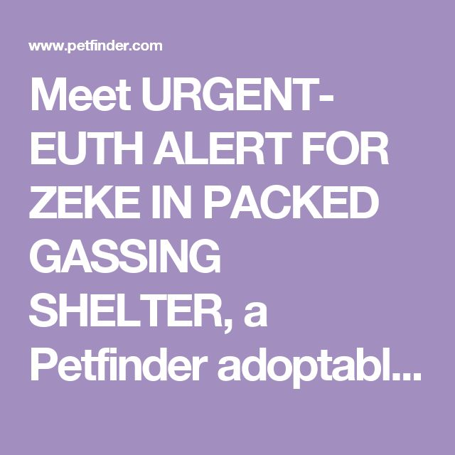Meet URGENT- EUTH ALERT FOR ZEKE IN PACKED GASSING SHELTER, a Petfinder adoptable Yellow Labrador Retriever Dog in Downingtown, PA | Petfinder.com