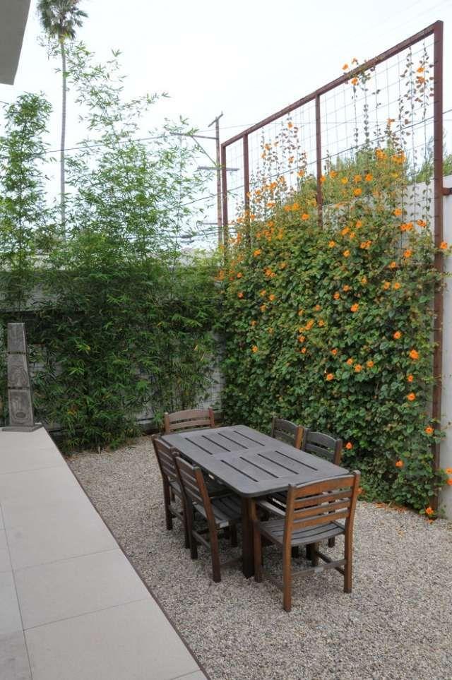 brise-vue-jardin-mur-végétal-fleurs-grimpantes brise-vue jardin