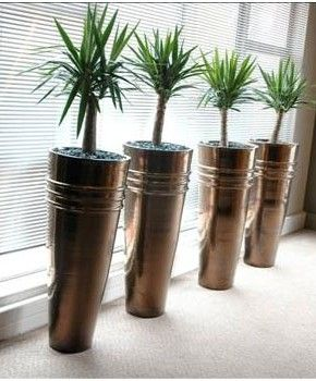 A Line Of Tall, Curved Metallic Glazed Planters Topped With Textured Bark  And Bright. Indoor Tropical PlantsOffice ...
