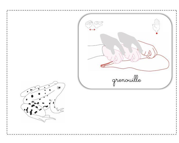 grenouille LSF illustration