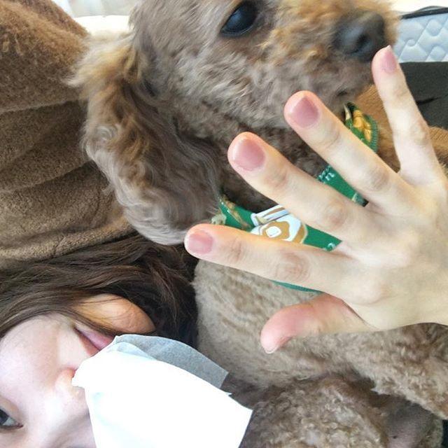 . いつかのプリンとの写真📸 鼻血でたときプリン手ずっと なめてくれてた🐶優しいねぇ 私のほうれい線なかなかやばいねぇ . 可愛くなるためには お金と多少の痛みと継続心が必要なんだって思った今日でした👸🏻ガンバロ . #mydog #myfamily #purin #愛犬 #家族 #プリン #私鼻血 #ほうれい線 #🐶