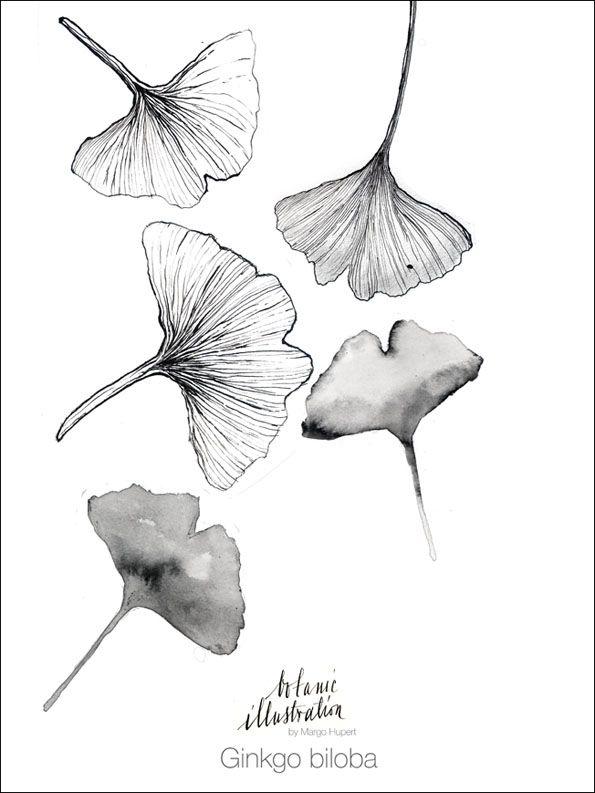 GInkgo biloba print drawn sketch margohupert.pl