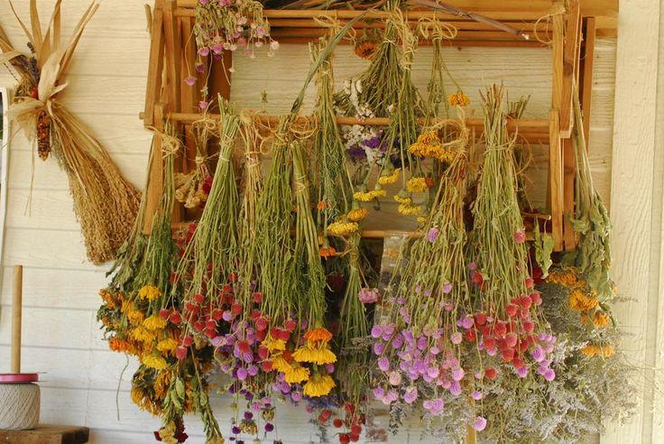 Flores secas. Dried flowers