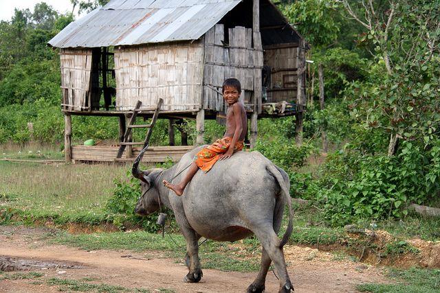 De to nordøstlige provinser Mondulkiri og Rattanakiri er Cambodias sidste vildnis. De er hjemsted for et mangfoldigt økosystem og forskellige etniske minoritetsstammer. Rejsen vil bringe jer i tæt kontakt med naturen og fjerntliggende stammesamfund. I kører på mountainbike igennem beskyttede områder i Mondulkiri, sejler i kajak på Tonle San floden og tager på trek i den uberørte jungle i Rattanakiri. Denne rejse er et eventyr for dem, der har en passion for unikke oplevelser.