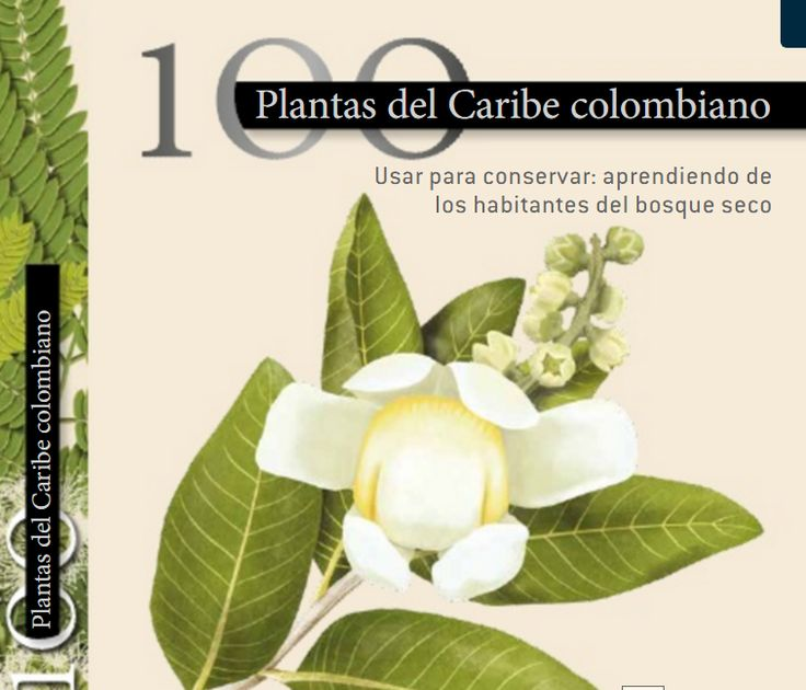 comida tipica colombiana,gastronomia colombiana,libros de cocina colombiana gratis pdf, curso cocina colombiana en linea online