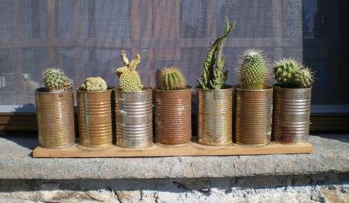 2008-le-mie-piante-grasse