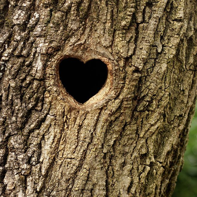 ...the heart of the tree ♥