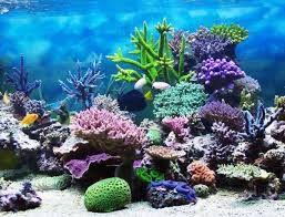 Pendidikan: Terumbu karang dan fakta tentangnya