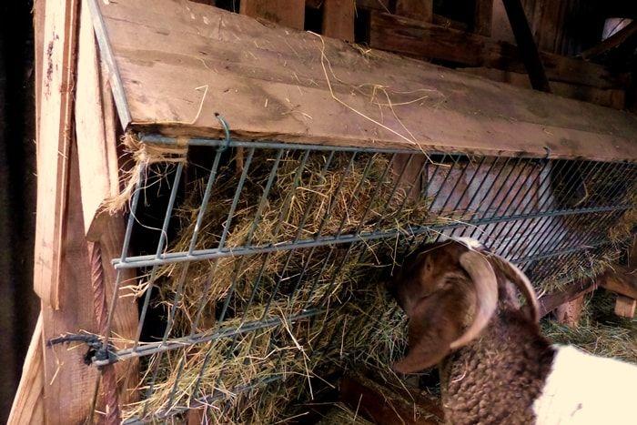 Wie Du Dich Auf Deine Ersten Ziegen Vorbereitest Teil 1 Wurzelwerk Ziege Ziegenstall Ziege Spielplatz
