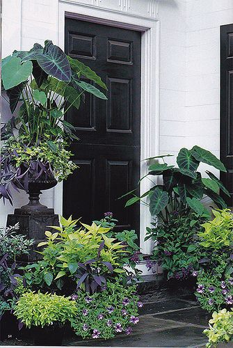 Begonia House Foyer : Best images about container gardening on pinterest