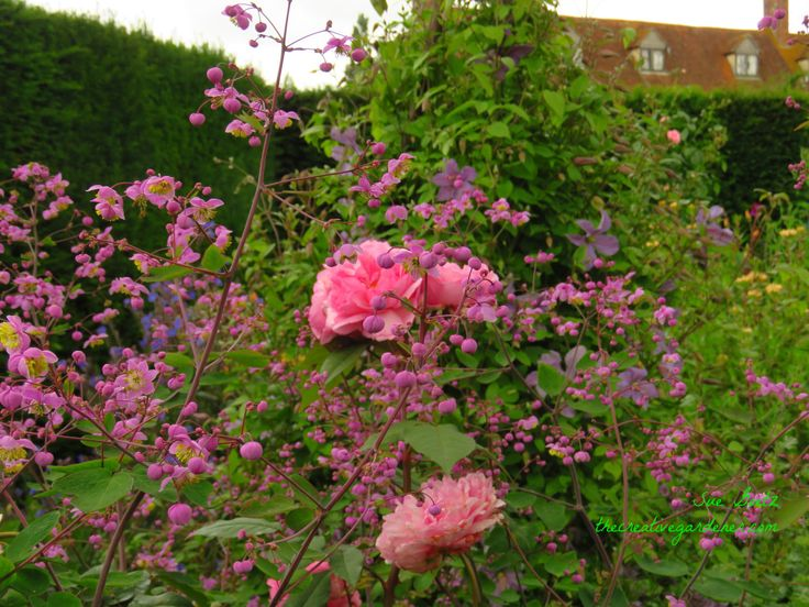 This first travelogue post is photos of those heavenly fragrant English roses all over Wales and England. It does seem unfair to give you a look, but not a smell of how a rose in Britain on a warm …