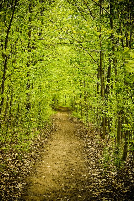 Sacred Grove, Palmyra, New York. One of the most beautiful places that i've had the opportunity to visit!