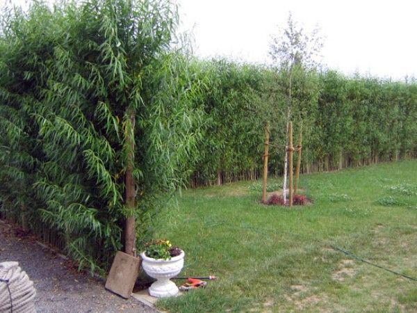 Alternative Zu Zaun Und Hecke Garten Garten Deko Pflanzen